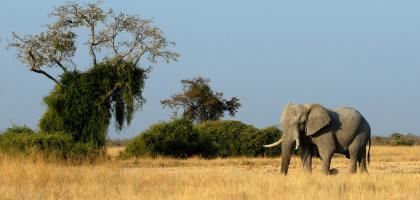 SCI Helvetia Chapter - Wildlife conservation success impossible in Africa without international hunting
