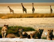SCI Helvetia Chapter - Pourquoi les communautés rurales d'Afrique australe disent que la chasse ne cessera jamais en Afrique